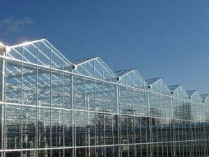 Different covering materials for greenhouses