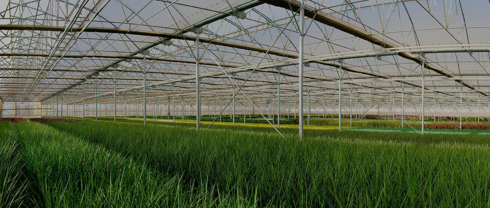 Manufacturing of Greenhouses