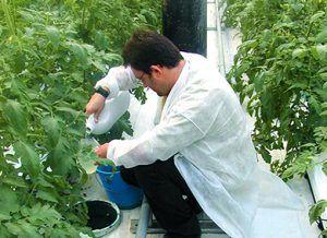 grower